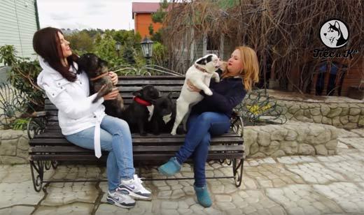 телеканал пес и ко